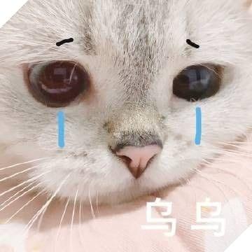 Mèo cute khóc mặt buồn bã