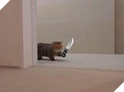 Mèo dễ thương chân ngắn cầm dao đi trong nhà