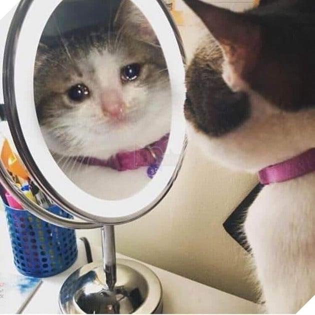 Mèo soi gương khóc ướt cả mắt
