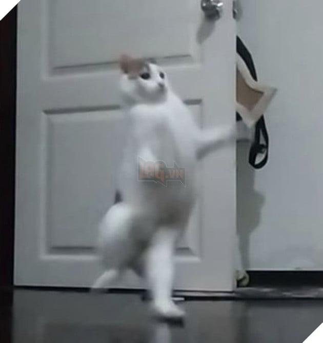 Mèo trắng bước đi tung tăng bằng hai chân như người