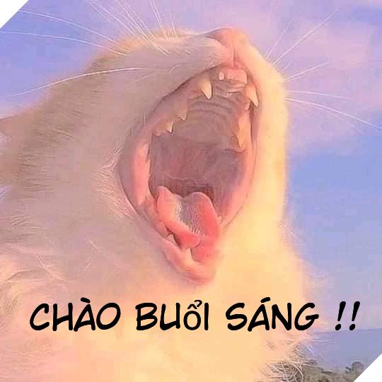 Mèo trắng há mồm nhe răng chào buổi sáng