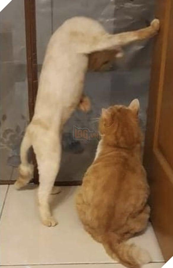Mèo vàng một tay chống cửa, một tay đưa nắm đấm doạ bạn