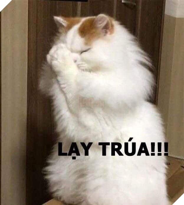 Mèo xù lông trắng chắp tay lạy chúa