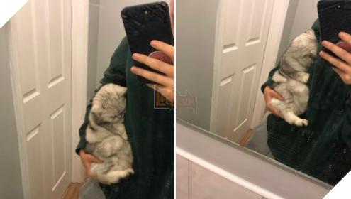 15 hình ảnh bé chó mèo xấu hổ khi bị sen chụp ảnh khiến bạn cảm thấy dễ thương không chịu nỗi 3